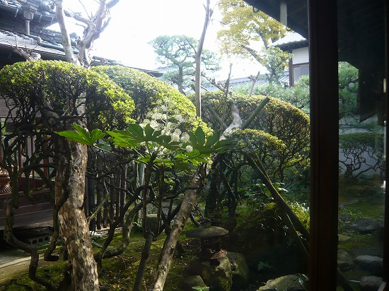 廊下から眺めたステキな庭園です。
