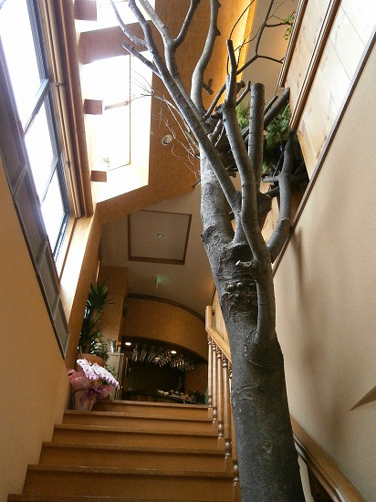 2Fに上がる階段に大樹のオブジェが飾ってあって、すっごい存在感を放っています。