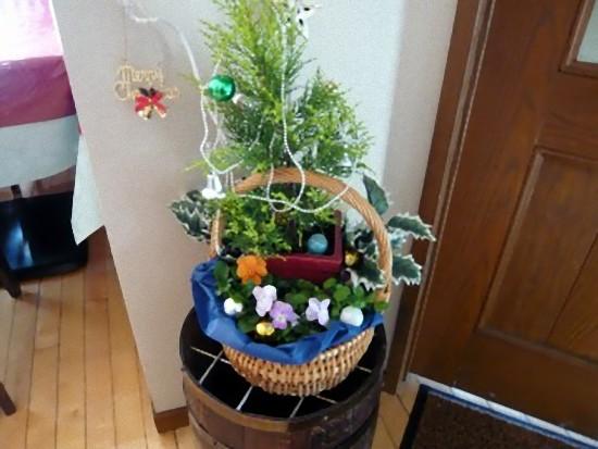 玄関横の寄せ植えもクリスマスムードになっています。