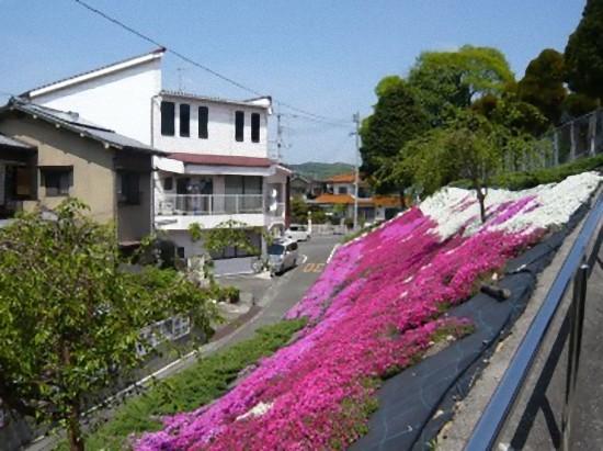「八幡神社」から斜面を見下ろしたところです。 向こうに表通りが見えています。